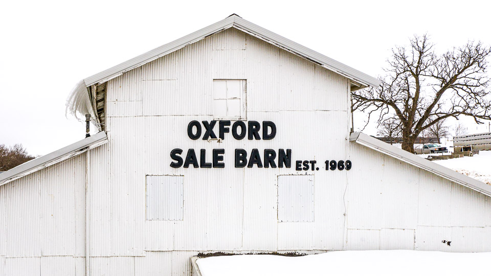 Oxford Sale Barn Oxford Iowa Feeder Cattle sign